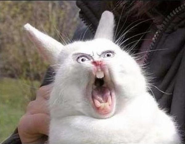Ass Rabbit 59