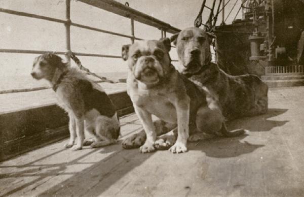 Titanic Dogs On Titanic