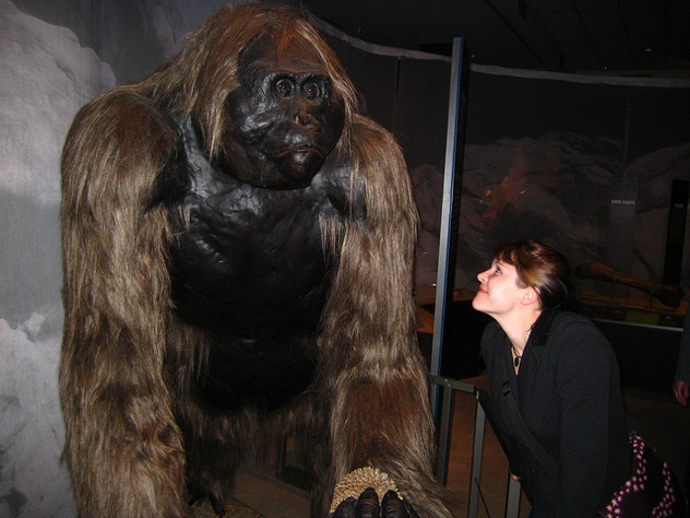 giant ape, King Kong, ape, monkey, museum, fossil, replica,