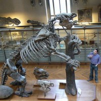 Giant Animals That Once Roamed the Earth #AtoZChallenge