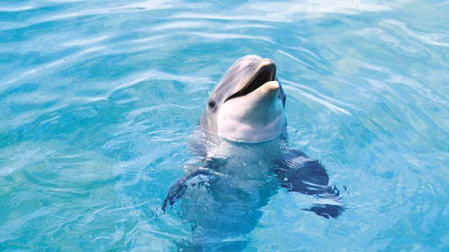 22677-Fish-Cute-Dolphin