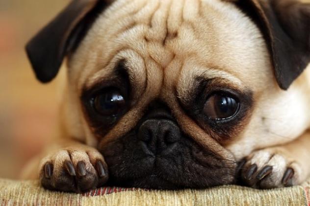Sad-Dog-Pictures-7