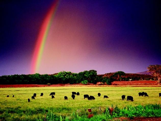 U Bar Wi Cows