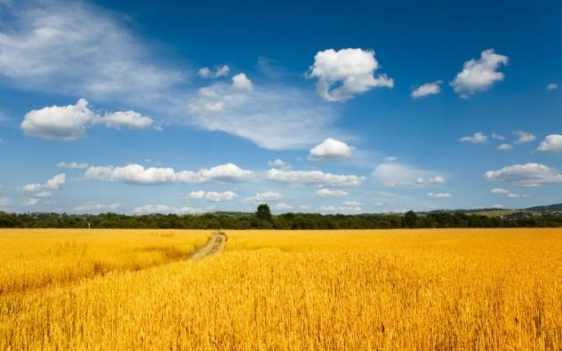 Wheat-Fields-Wallpaper-1