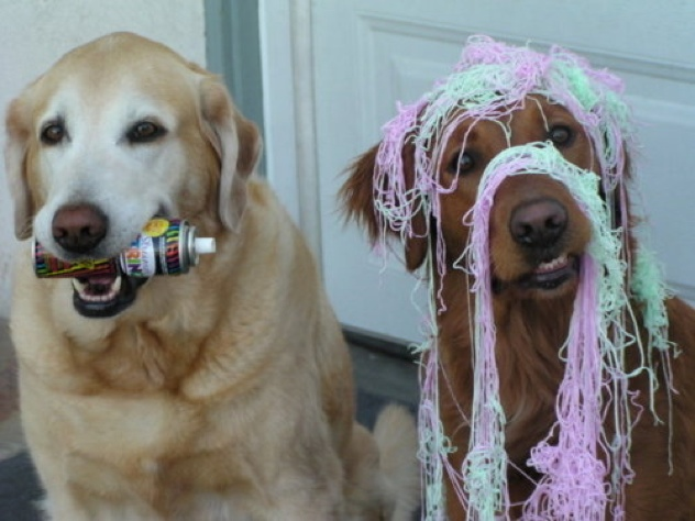 When-Dogs-Get-Ahold-Of-Silly-String-12911-1301241371-1