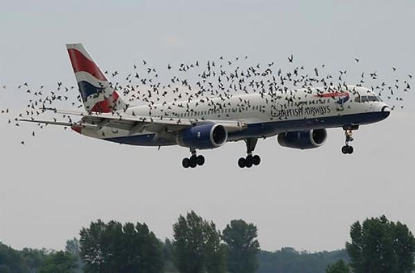 birdswarm