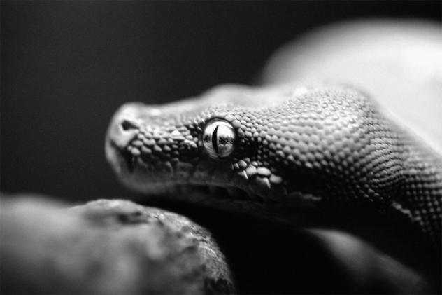 10- snake