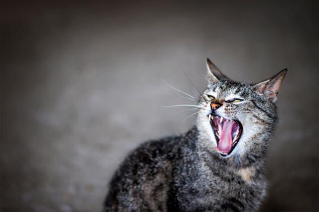 5- cats