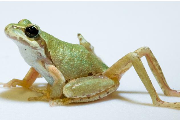 6- frog