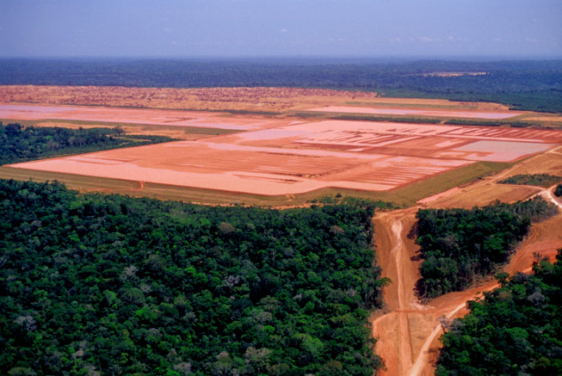 10 Wild Facts About The Amazon Rainforest - Listverse
