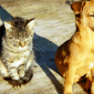 history_dog_and_history_cat