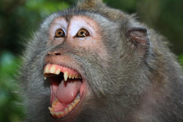 1-mad-monkey_000004304922_Small