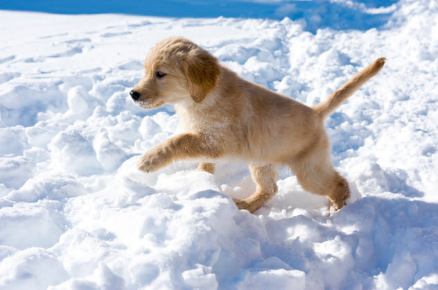 10-dog-in-snow_000014993709_Small