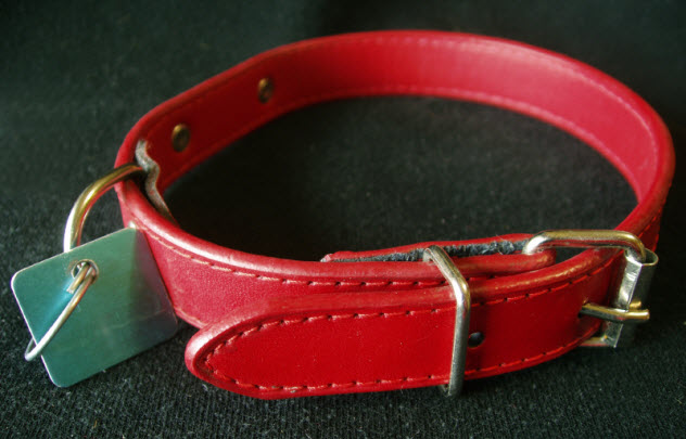 6-dog-collar_000001636559_Small