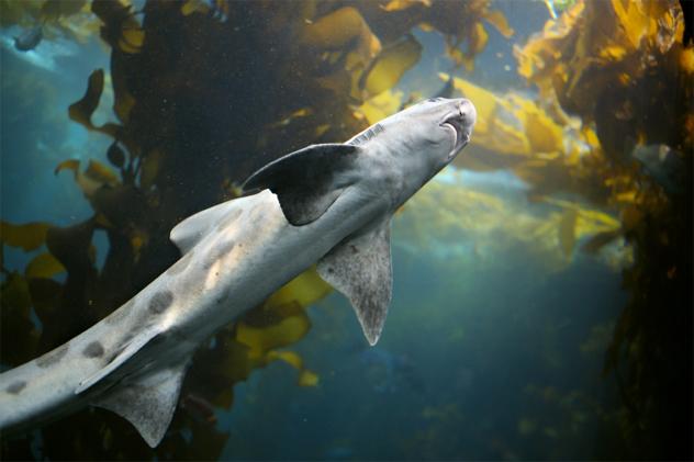 2- shark