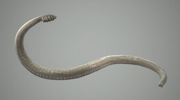 9-intestinal-worm_000029360486_Small