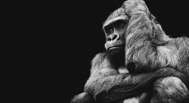10 facts about tarzan that will surprise you listverse - Tarzan gorille ...