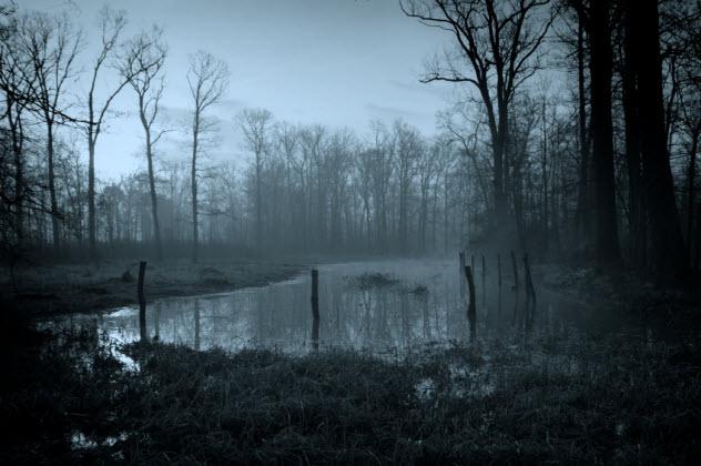 3-swamp_000014686411_Small