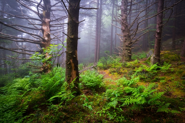 Scenic Forest Hiking Appalachian Trail North Carolina Nature Lan