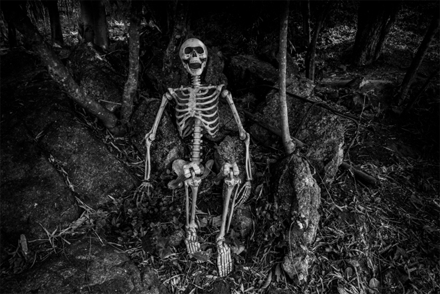 Still life photography with human skeleton in forest
