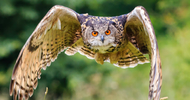 +-flying-owl_000042863856_Small