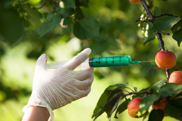 4-genetically-modified-food_000025941023_Small