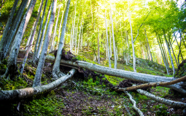 5-fallen-trees-in-forest_000080380835_Small