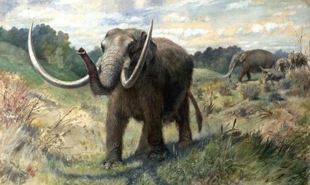 6-mastodon-tusks