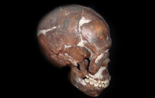 5a-qafzeh-cave-skull