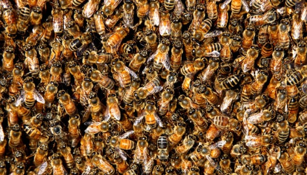 6-bee-swarm_9579880_SMALL