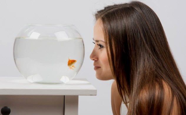 8b-watching-goldfish-497789606