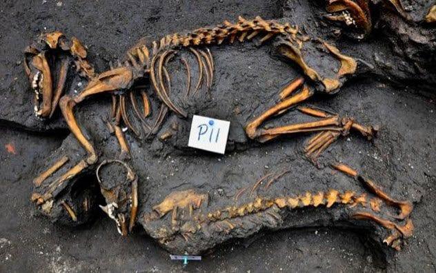 6-aztec-dog-burial