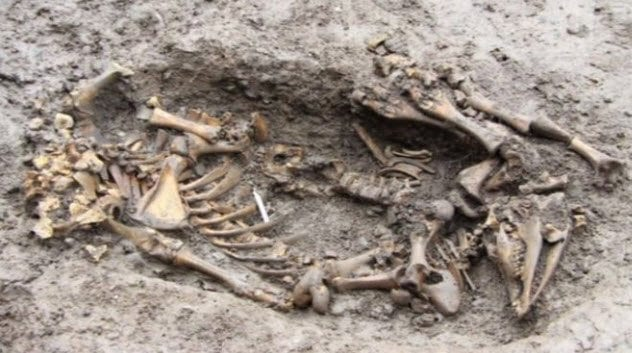 8-shropshire-animal-burial