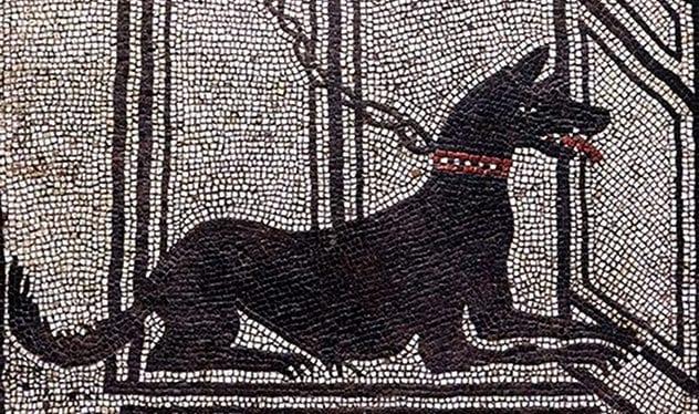 mosaic dogS