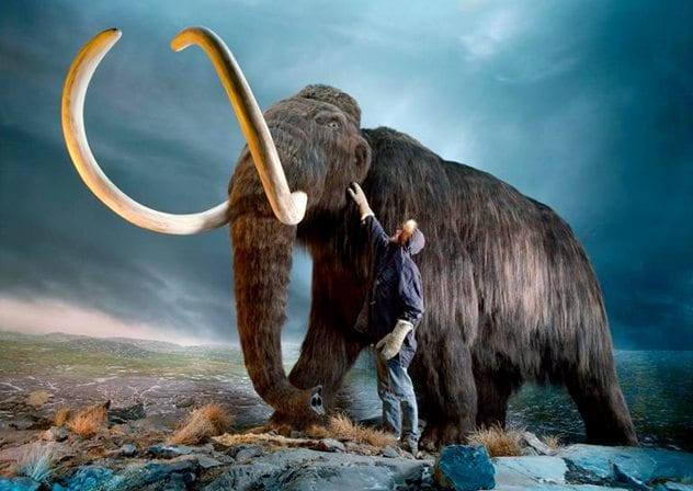 humans and woollymammoth