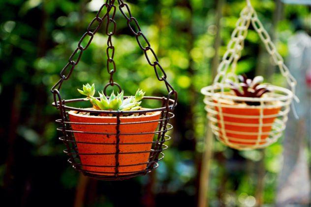plant-pot