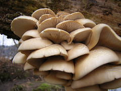 Mushrooms can be harmful to you