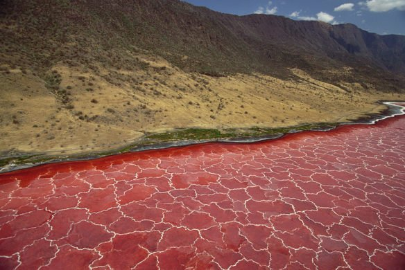 Lake Natron: The Alkaline Tanzanian Lake That Turns Animals into Stone
