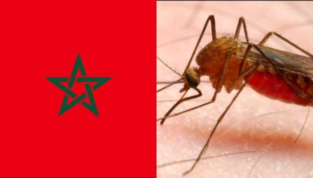 Morocco is among the Only Malaria-free Countries in Africa