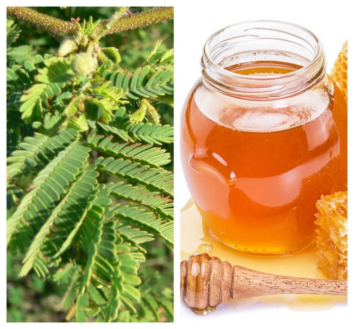 Ancient Contraceptives Methods Acacia and honey