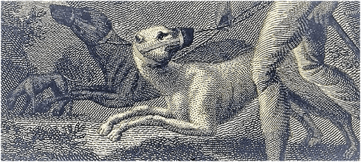 Negro Dogs: How Vicious Dogs Were Used To Hunt Runaway Slaves