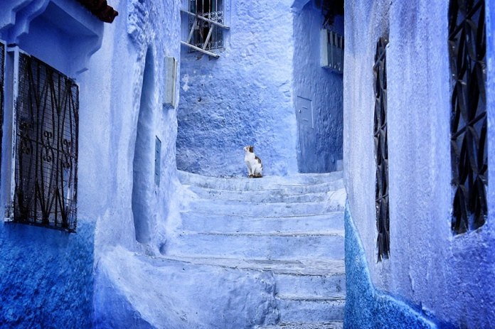 The Vivid Blue Houses of Morocco