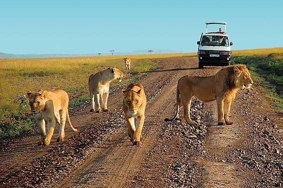 Kenya's top tourist attractions