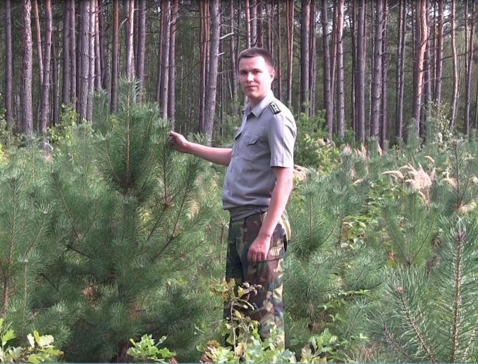Головний лісничий Вячеслав Дейнека біля молодих насаджень