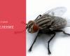 Владимир Калуцкий: Переселение мух