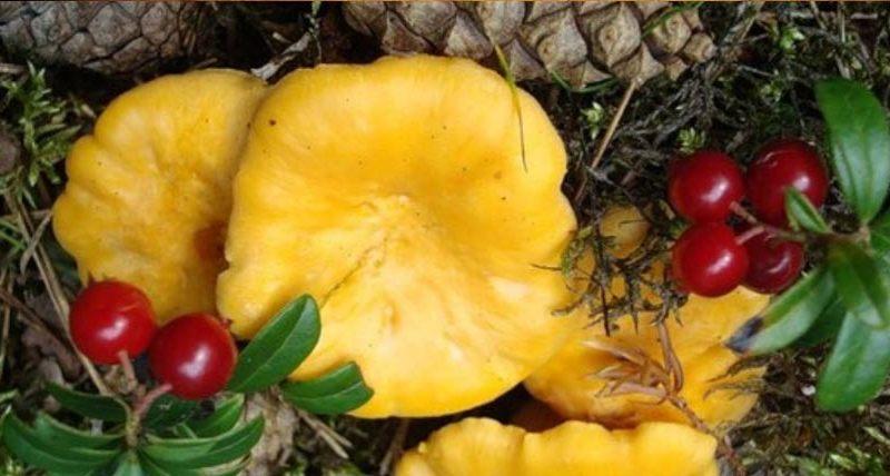 Сказки для детей про грибы.