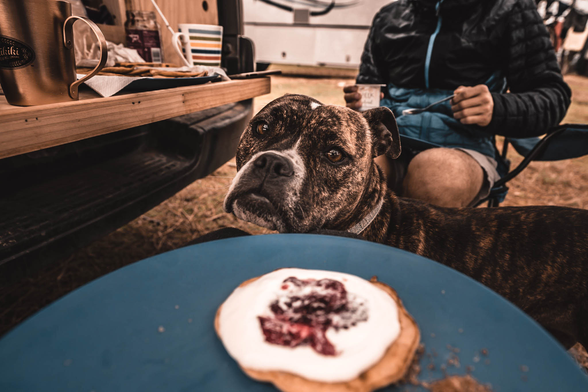 dog hungry camping pancake