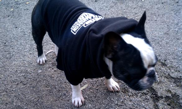 Bubba in his sweatshirt