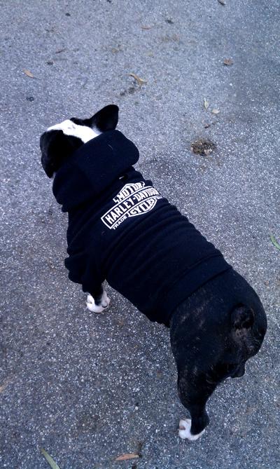 Bubba in his Harley sweatshirt