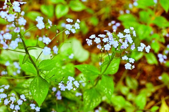 light blue flower bloom